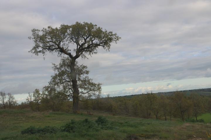 Una técnica 3D distingue el estado de salud de árboles y de los arbustos con imágenes desatélite
