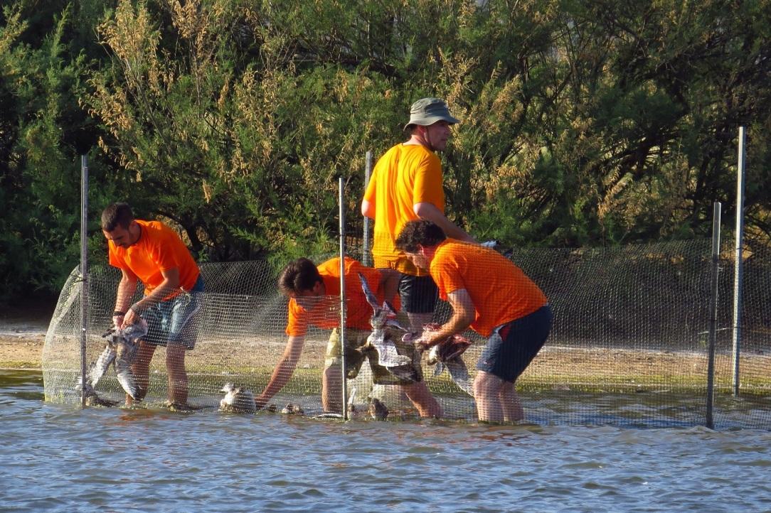 voluntariado, voluntariado ambiental, espacios naturales, castilla león, naturaleza, cuidado