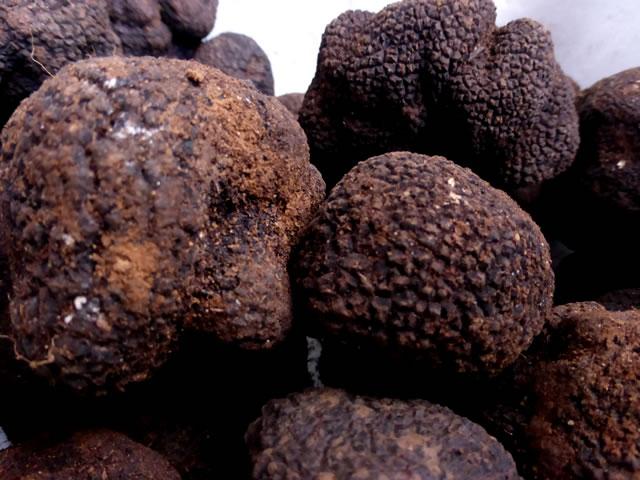 trufa-negra-bacteria-aroma-sabor-trufas-del-senorio