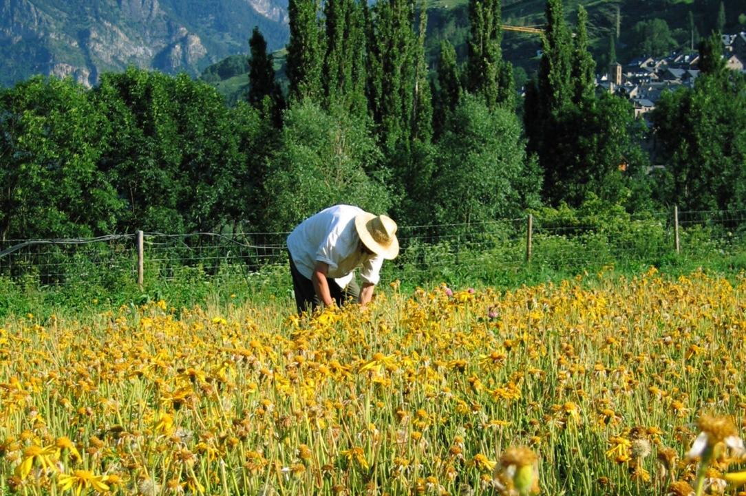 151001agricultor_tcm7-398354_noticia