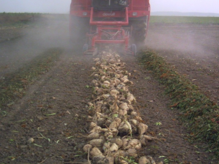 Castilla y León abonará diez millones de euros a más de 5.500 agricultores por la ayuda a la remolacha de 3 euros por tonelada que estabapendiente