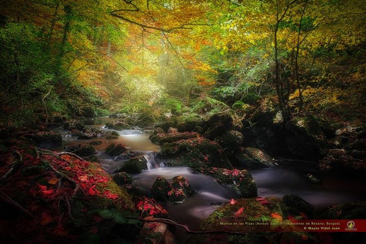 El I Foro de Bioeconomía Forestal del Suroeste de Europa sirve de Escaparate para mostrar el modelo de Gestión de Castilla yLeón