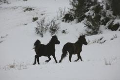 caballos montaña Palentina