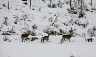 ciervos montaña Palentina