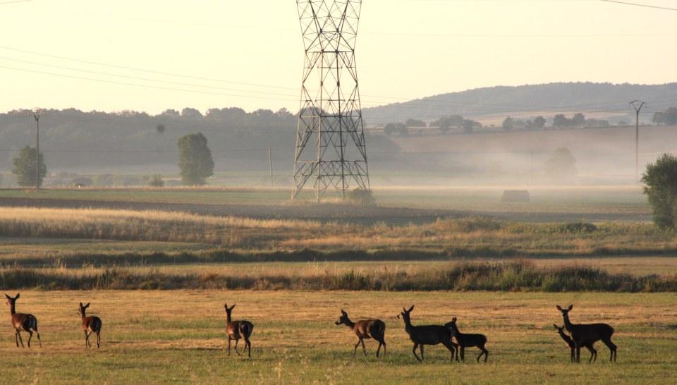 ciervos, medio ambiente, montaña palentina,