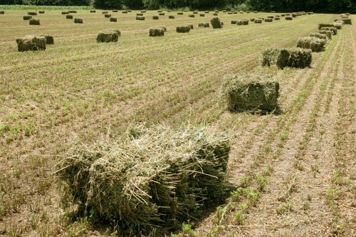 Agricultura y Ganadería realiza más de 17.300 controles para garantizar la sanidad vegetal de los cultivos agrícolasregionales