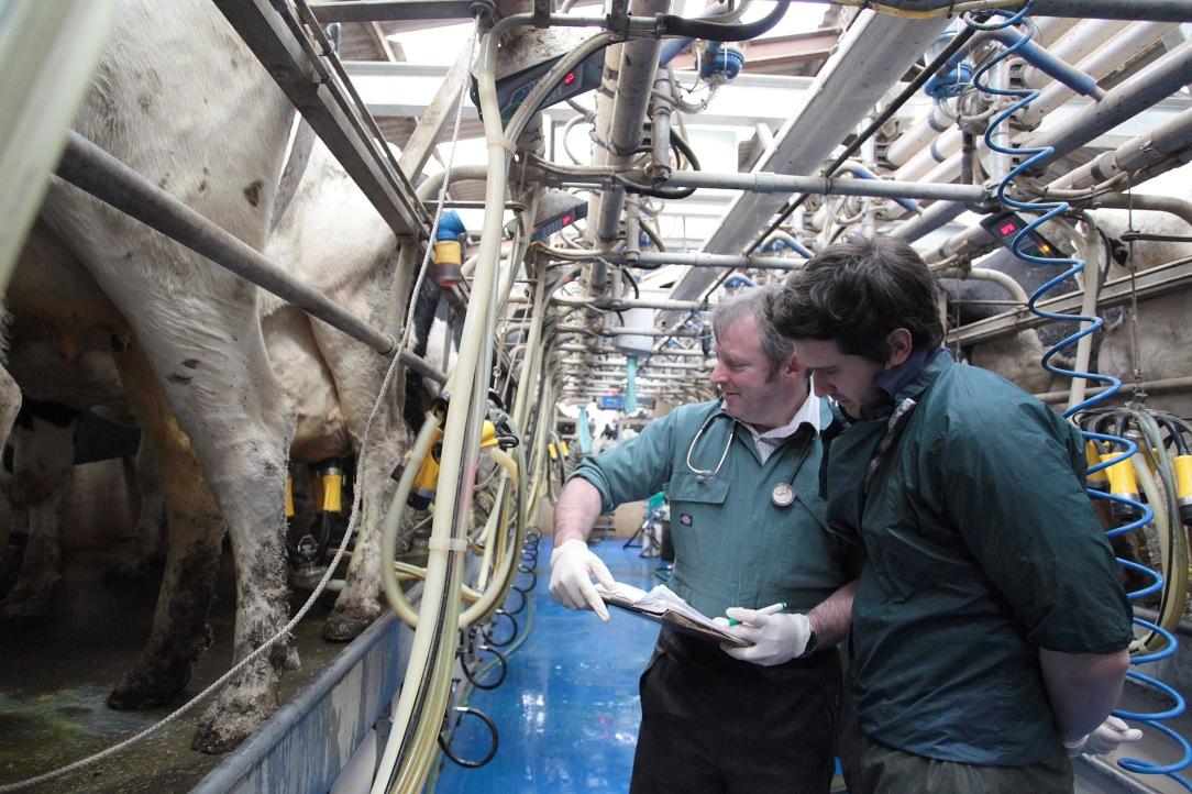 On-farm-visit-vets-in-milking-parlour-2.jpg