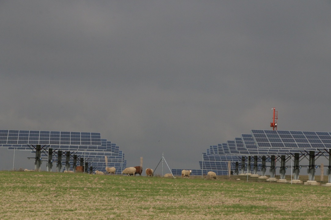 ovejas paneles solares 12.jpg