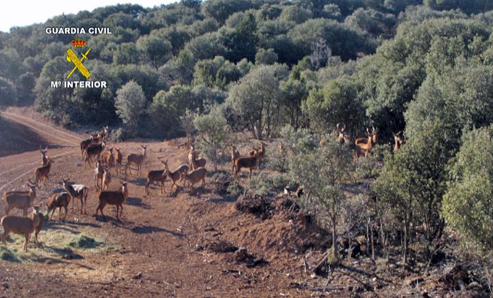 Nuevas normas para el control de subproductos animales no destinados al consumo humano en la práctica cinegética de cazamayor