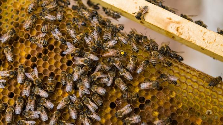 La Diputación de Zamora propone a los apicultores zamoranos federarse para conseguir la marca de garantía para la miel de laprovincia