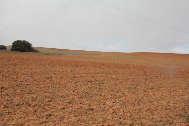 La Junta declara de utilidad pública y urgente la ejecución de sendas concentraciones parcelarias en las provincias de Soria ySalamanca
