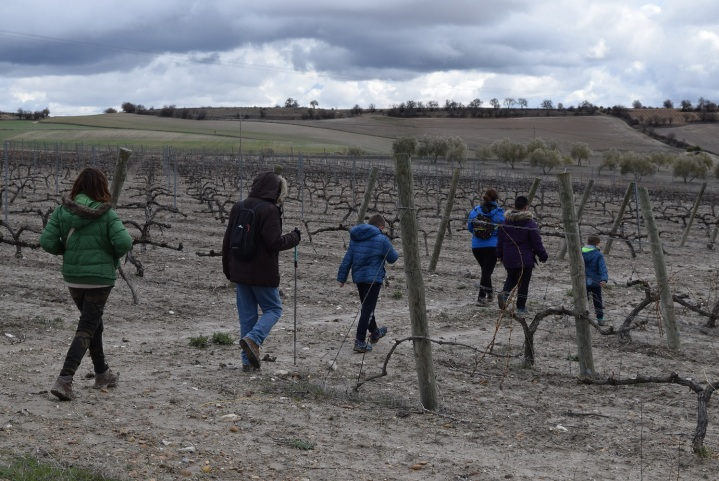 Miradas del Vino desde la Ruta deCigales