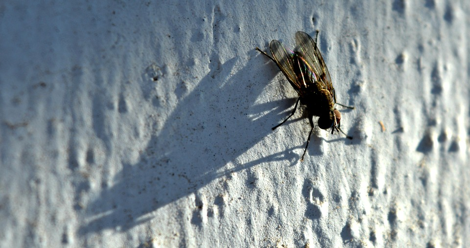 insect-2533372_960_720