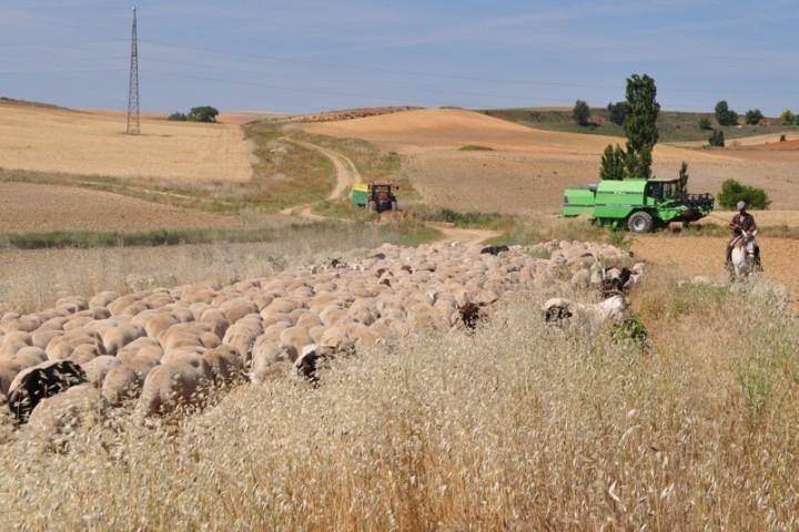 La Consejería de Agricultura, Ganadería y Desarrollo Rural convoca las ayudas a la suscripción de seguros agrarios a las que destinará 8,1 millones deeuros
