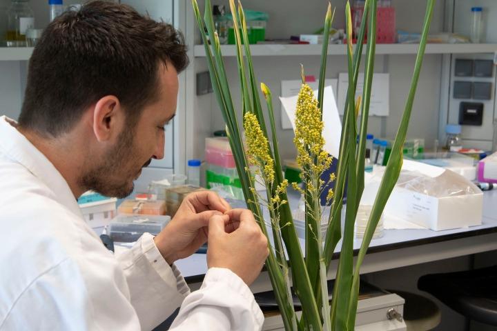 Los mecanismos de las plantas frente a la sequía abren nuevas vías para el desarrollo de cultivos másresistentes