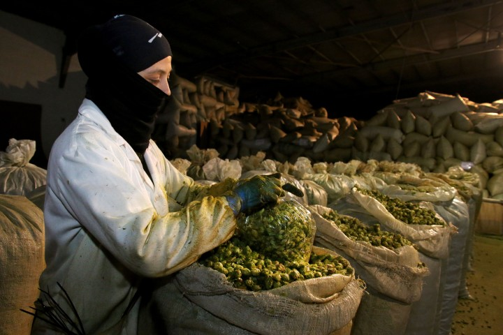 Agricultura, Ganadería y Desarrollo Rural destina 150.000 euros en ayudas al fomento del cultivo del lúpulo en Castilla yLeón