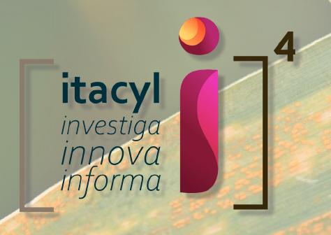Itacyl organiza apra el 11 de marzo una jornada online sobre 'Hongos foliares en cereales deinvierno'