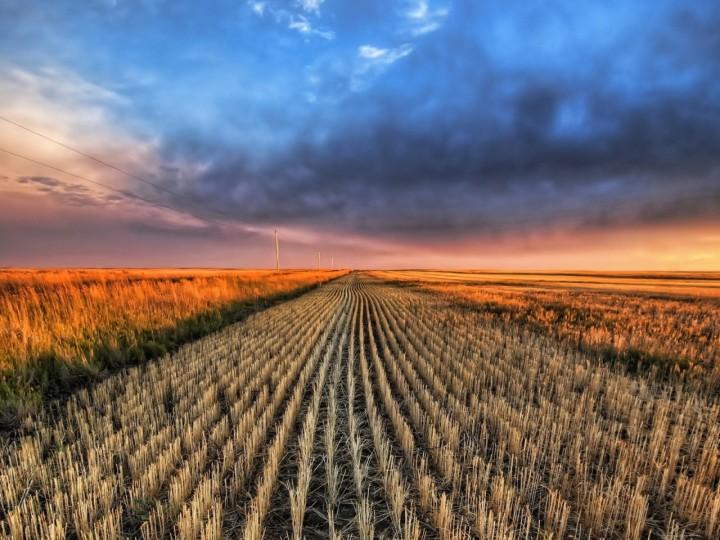 El Gobierno adapta la normativa nacional sobre sanidad vegetal a los nuevos reglamentos de laUE